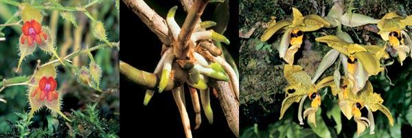Фото №3 - Акробаты мира флоры