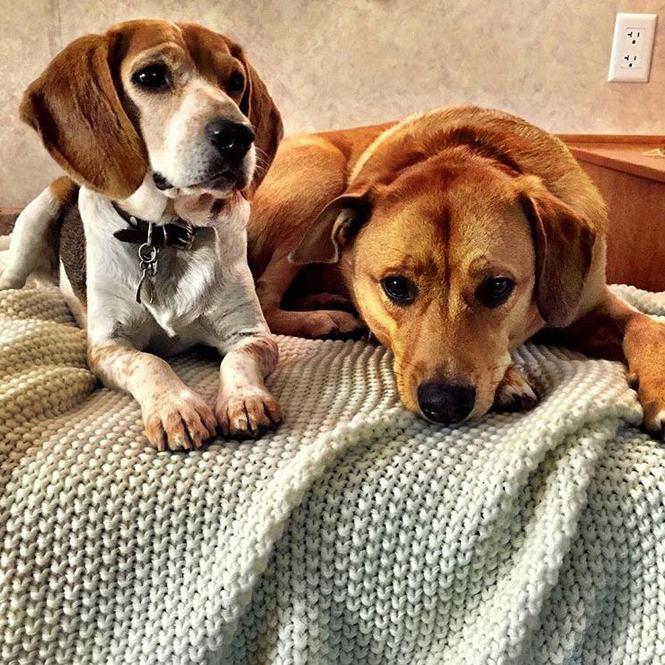 Джордж Клуни взял трех собак из приюта ⋆ Блог Евы | 665x665