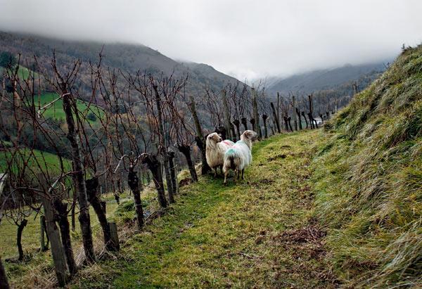 Фото №6 - Баски «Дикой Франции»