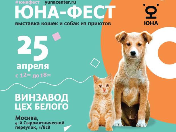 Фото №2 - Твори добро: как помочь животному из приюта
