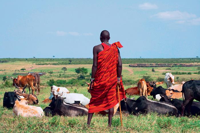 Фото №5 - Верные многоженцы: масаи