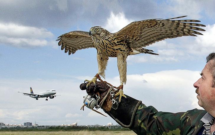 Фото №2 - Прерванный полет