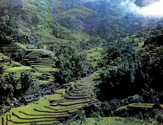 Фото №1 - Бамбуковая крепость