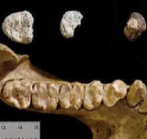 Фото №1 - Обнаружены зубы неизвестного вида обезьян
