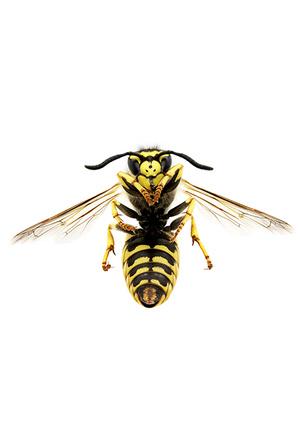 Фото №9 - Пчела с эффектом anti-age