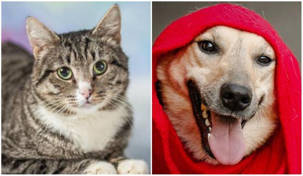 Фото №1 - Котопёс недели: собака Стелла и кот Афанасий ищут своих людей