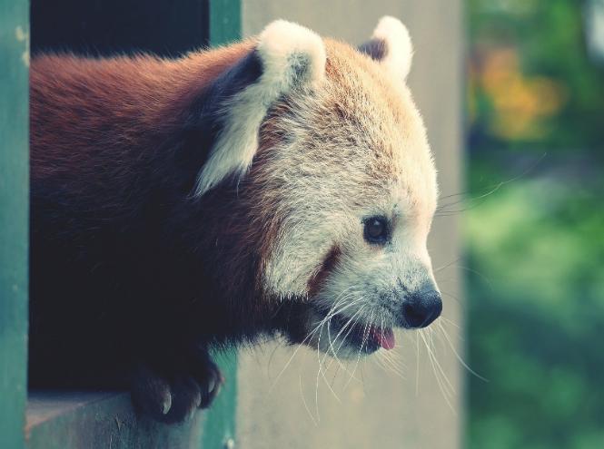 Фото №17 - Самые ми-ми-милые дикие животные