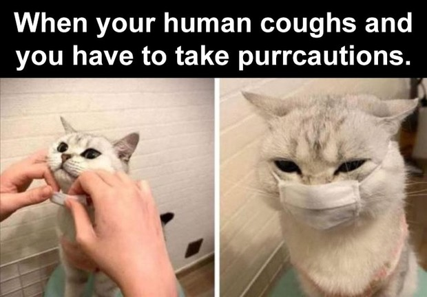 Фото №16 - Милота и угар: 20 дико ржачных мемов про животных