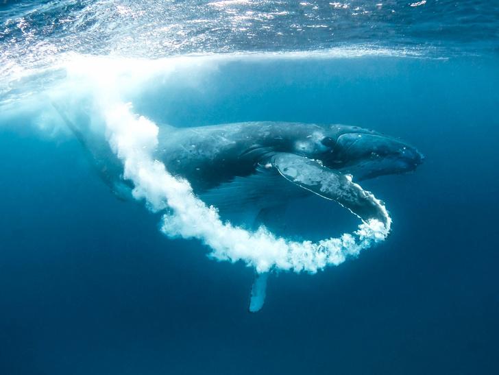 Фото №1 - Подводные пузырьки