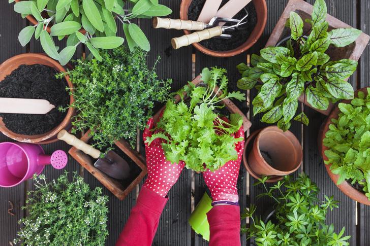 Фото №1 - Календарь садовода: что и когда сажать дома и на даче