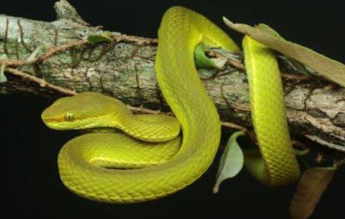 Фото №1 - Новый вид змей назвали в честь основателя «Хогвартса»