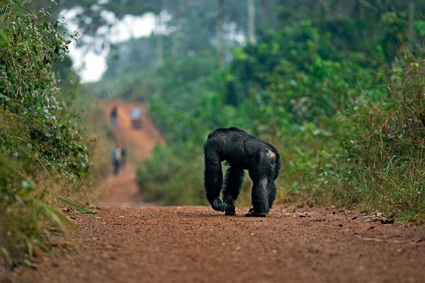 Фото №7 - 12 обезьян
