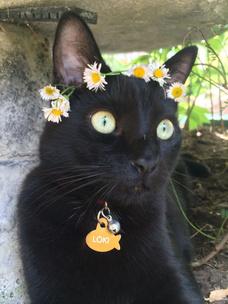 Фото №3 - Тест: Выбери черного котика и получи предсказание от Сабрины Спеллман