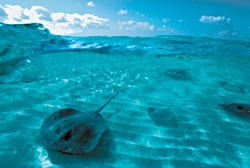 Фото №5 - Мушкетеры подводного царства
