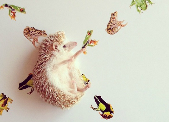 Фото №1 - Животные в Instagram