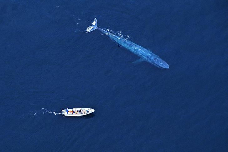 Фото №1 - Гиганты планеты: самые большие животные, которые сейчас живут на свете
