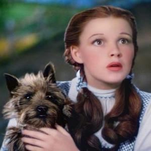 Фото №8 - Усатые-хвостатые: 10 самых милых питомцев из кино