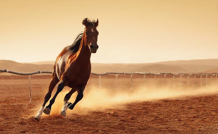 Фото №1 - Почему у лошадей появились копыта