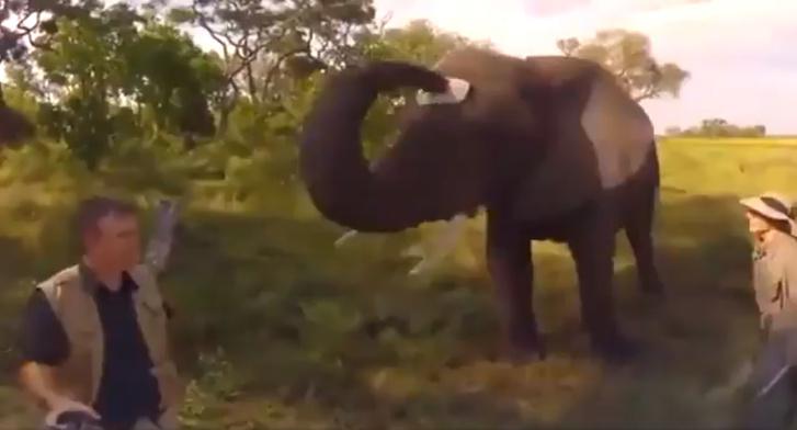 Фото №1 - Видео со слоном, который украл у фотографа кепку, набрало 4,5 миллиона просмотров