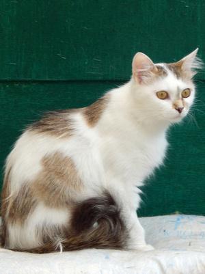 Фото №2 - Котопёс недели: ласковая кошка Шарлотта и благовоспитанный пес Рябчик ищут дом