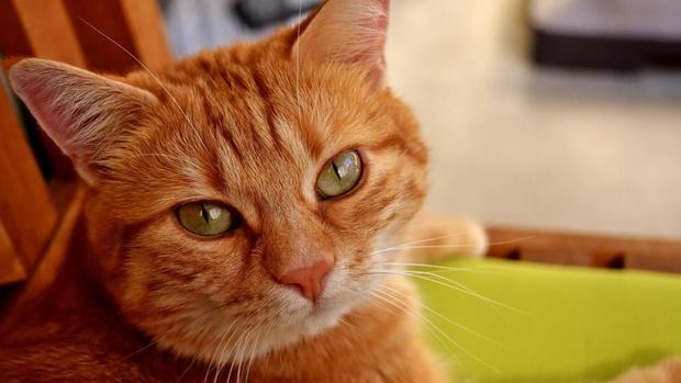 Фото №3 - Топ-10 самых популярных котиков 2018 года
