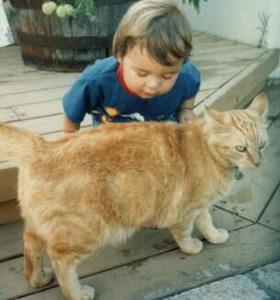 Фото №1 - Госпитальную инфекцию разносят кошки