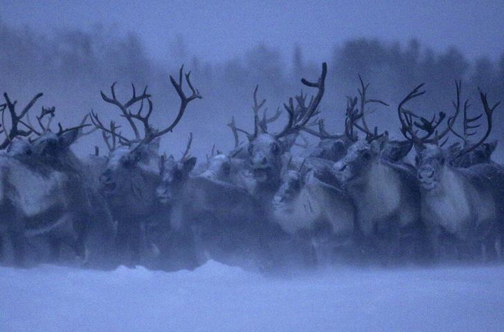 Фото №8 - Короли Севера: неожиданный Мурманск глазами местных жителей