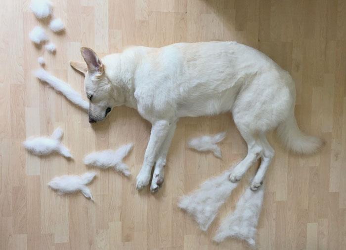 Фото №4 - Девушка создает забавные образы для своей собаки из ее собственной шерсти (много фото)