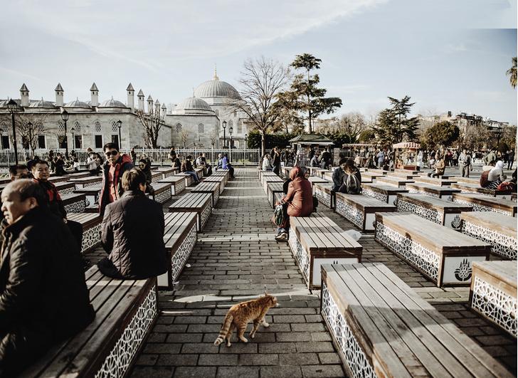 Фото №11 - Короли улиц: настоящие хозяева Стамбула