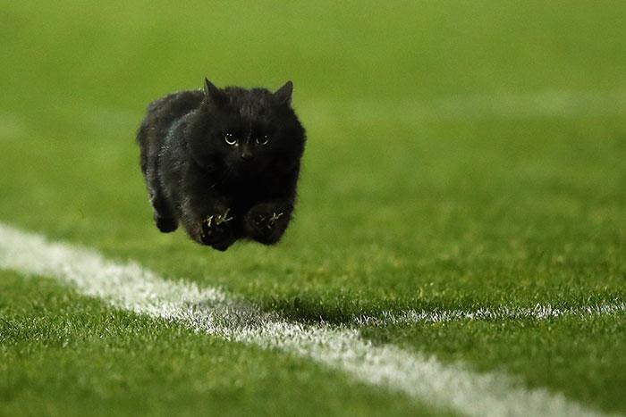 Фото №1 - На москвича завели дело за избиение полицейского котом
