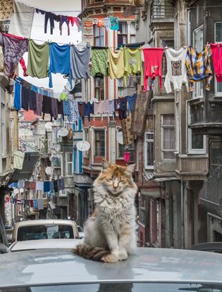 Фото №3 - Стамбульские бьюти-находки Ивана Безуглого