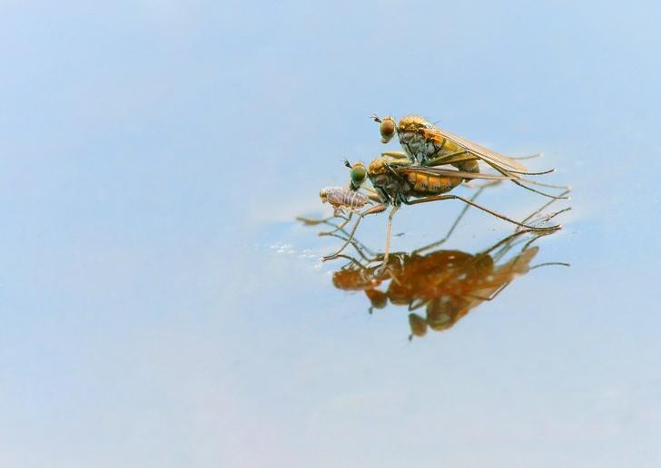 Фото №6 - Драмы, инженерные изобретения, смертельные опасности: как проходит весна в мире насекомых и пауков