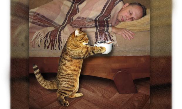Фото №1 - В каких российских городах больше всего любят котиков: свежий рейтинг