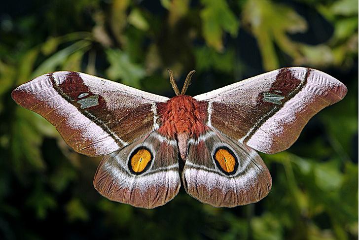 Фото №2 - Бритые бабочки, инерция собак и другие новые открытия