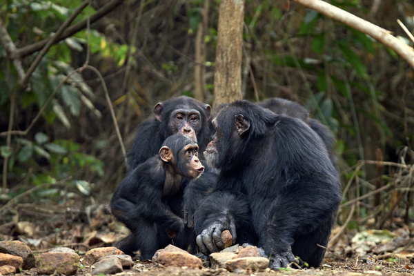 Фото №4 - 12 обезьян