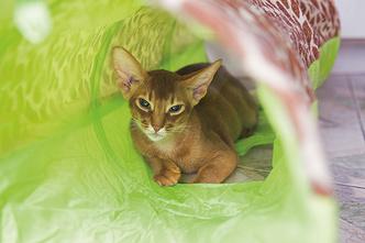 Фото №8 - «Где шесть, там и семь»: кошкин дом Наталии Гулькиной