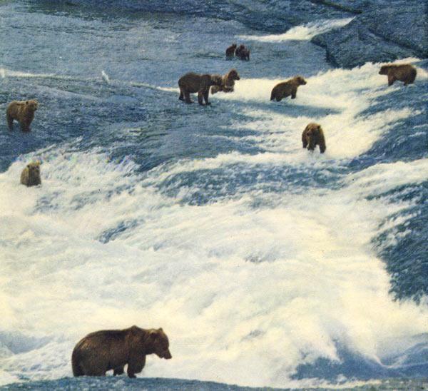 Фото №1 - За полярным зверем