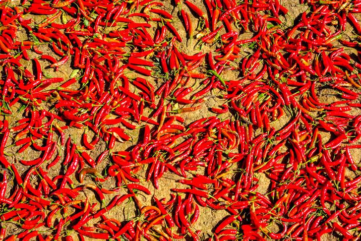 Фото №1 - Что будет, если съесть самый острый перец в мире