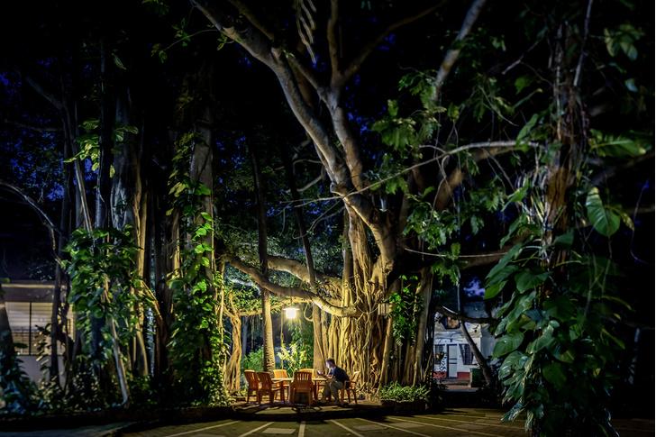 Фото №2 - Фотопроект: рассвет в джунглях