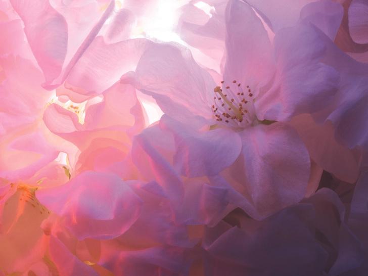Фото №2 - Аромат дня: J'adore Infinissime от Dior