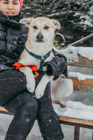 Фото №3 - Котопёс недели: пес Коржик и кошка Дайкири