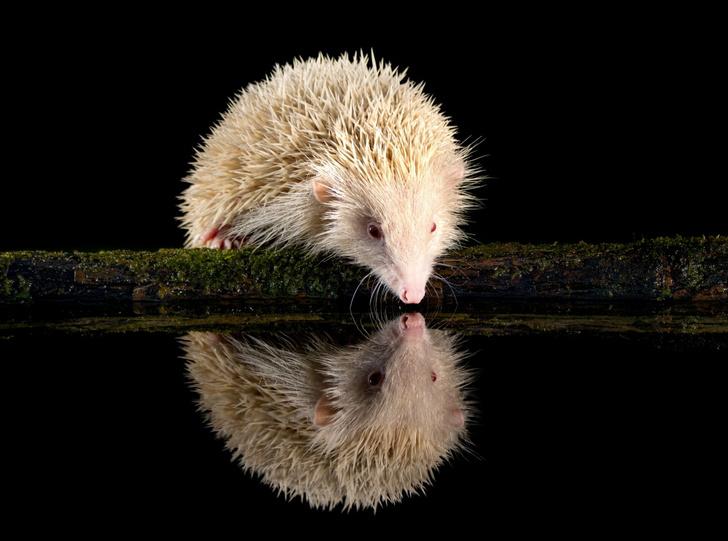 Фото №1 - Как в зеркале