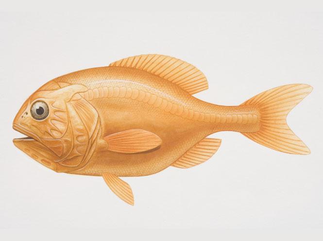 Фото №5 - 10 видов рыбы, которую лучше не есть