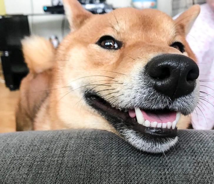 Фото №1 - Как собаки распознают улыбку