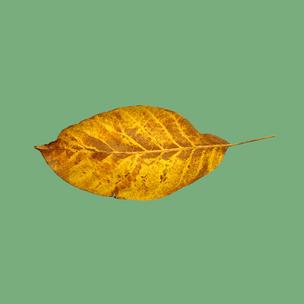 Фото №7 - Тест: Выбери осенний листок и узнай, с чем тебе придется расстаться в сентябре 🍂
