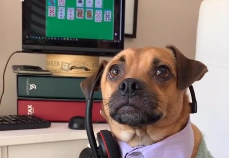 Фото №1 - Заставку сериала «Офис» пересняли с собаками в главных ролях (видео)