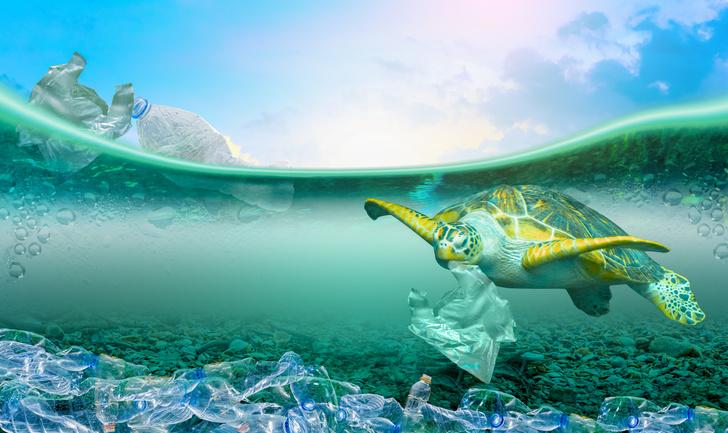 Фото №2 - Спасаем рыбок: самый милый и модный эко-тренд в косметике 🐟