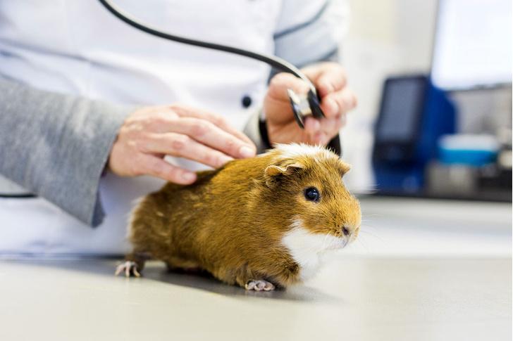 Фото №4 - Источник заразы: животные, которые нас убивают
