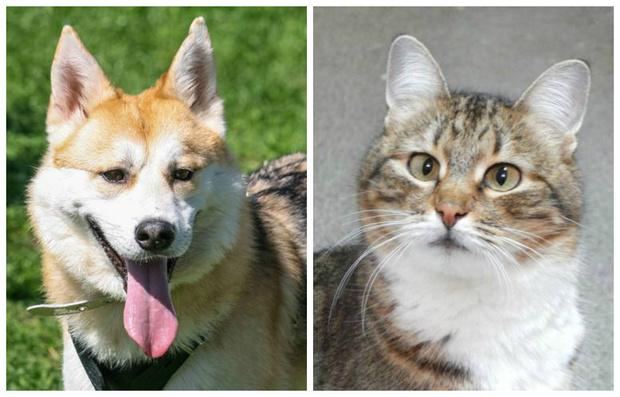 Фото №1 - Котопёс недели: пес Хьюго и кошка Люси