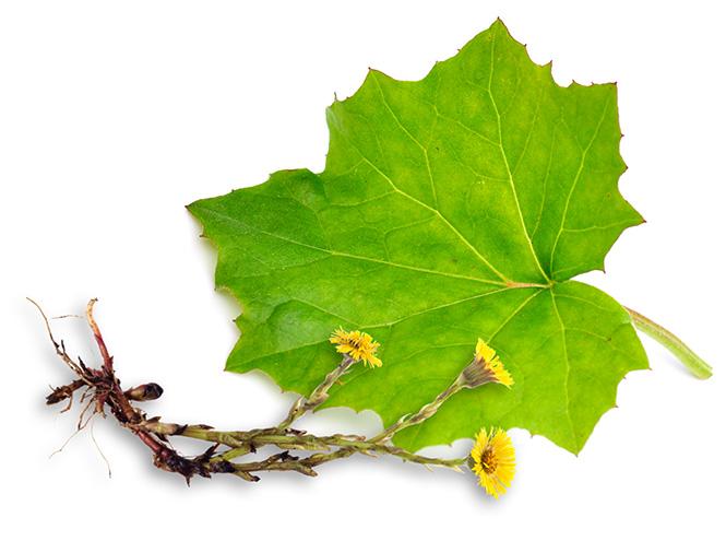 Фото №5 - Самые полезные лекарственные травы